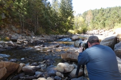 Photographing American Dippers