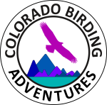 Colorado Birding Adventures
